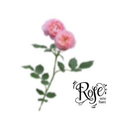 Roses blur flowers vector