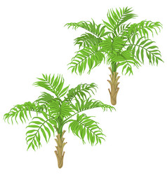 young palm trees on white background vector image