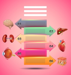 Science infographics with arrows and human organs vector