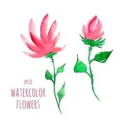 Watercolor flowers vector