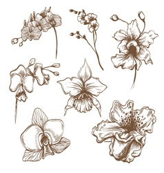Hand drawn orchid flower set vector