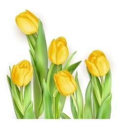 Tulip Pinktulips EPS 10 vector image