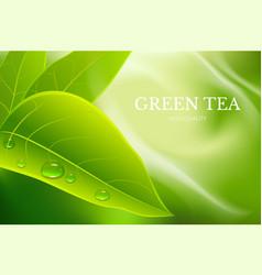 advertising poster for tea brand for catalog vector image