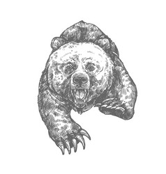bear attack isolated sketch of aggressive animal vector image vector image