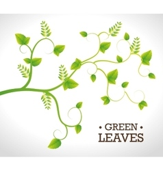 Green nature and leaves design vector image vector image