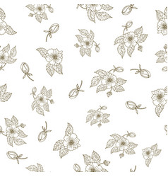 Hand drawing peony flowers seamless pattern vector