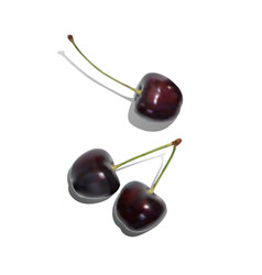 realistic ripe red cherry berries vector image