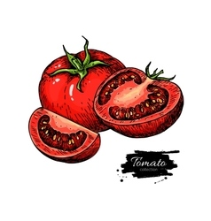 Tomato drawing isolated tomato and sliced vector