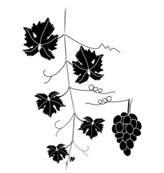 Grape vine vector