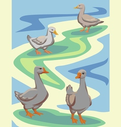 Waterfowl birds vector