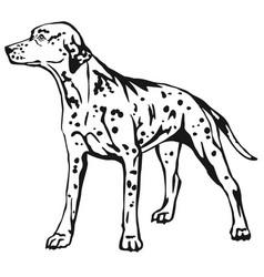 decorative standing portrait of dog dalmatian vector image vector image