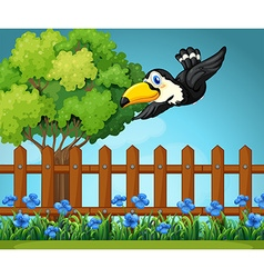 Toucan flying in the sky vector image vector image