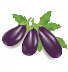 eggplants vector image vector image