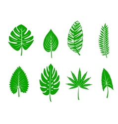 Green tropical leaves vector image
