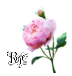 Rose bud blur vector