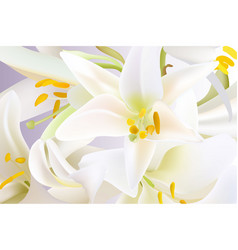white lily flowers pattern vector image