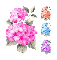 Purple flower hydrangea vector