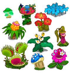 set of different flowers mushrooms and berries vector image