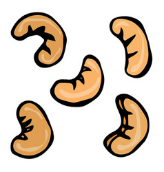 cashew nuts doodle style design isolated vector image