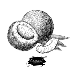 Hand drawn coconut tropical summer fruit vector