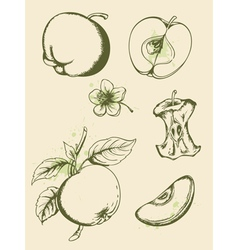 vintage ripe apples vector image
