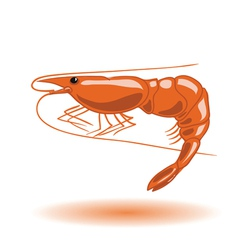 orange shrimp vector image vector image