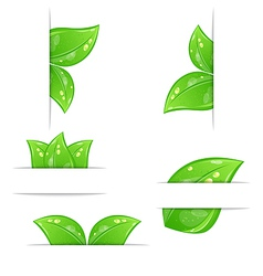 Set of green ecological labels with leaves vector image vector image