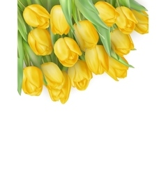Tulip flowers isolated EPS 10 vector image