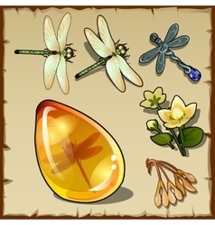Symbols of summer plants dragonflies and amber vector