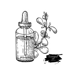 Marjoram essential oil bottle and marjoram leaves vector