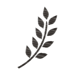 monochrome striped branch olive with leaves vector image