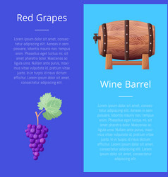 Red grapes and wine barrel vector