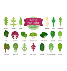 Green vegetables leaf set vector