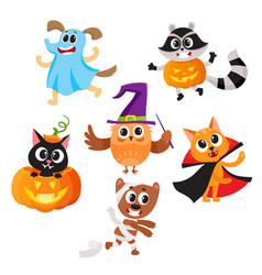 animal characters dressed in halloween costumes vector image