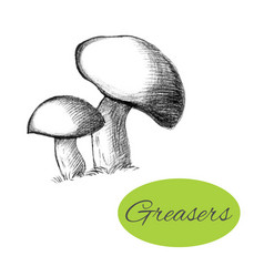Greasers hand drawn mushrooms vector