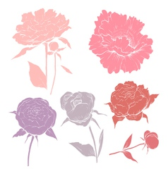 Hand drawn peony flowers set vector image