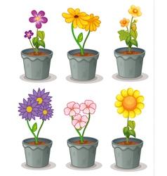 Pot Plants vector image