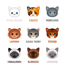 cute cat icons - set v vector image vector image