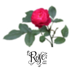 Red blur rose vector