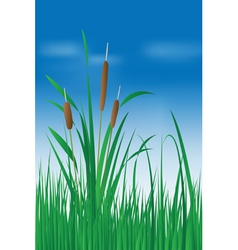 Reed plant over blue sky vector image