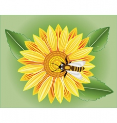 sunflower and bee vector image vector image