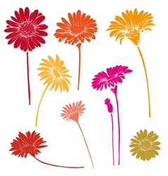Hand drawn gerber flower set vector image