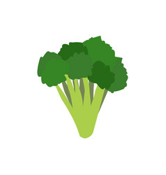 broccoli isolated greens on white background vector image vector image