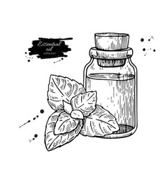 mint essential oil bottle and peppermint leaves vector image vector image