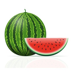 watermelon 03 vector image vector image