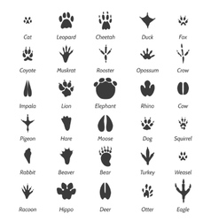 Animal tracks and bird footprints vector