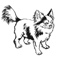 decorative standing portrait of dog long-haired vector image