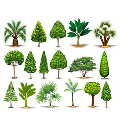 different types of green trees vector image