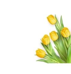 Yellow tulips flowers eps 10 vector