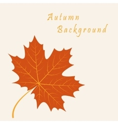 Abstract background with autumn maple leaves vector